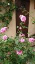 薔薇が綺麗に咲き出しました